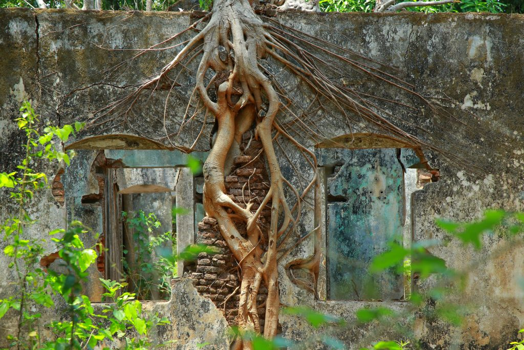 grounding roots