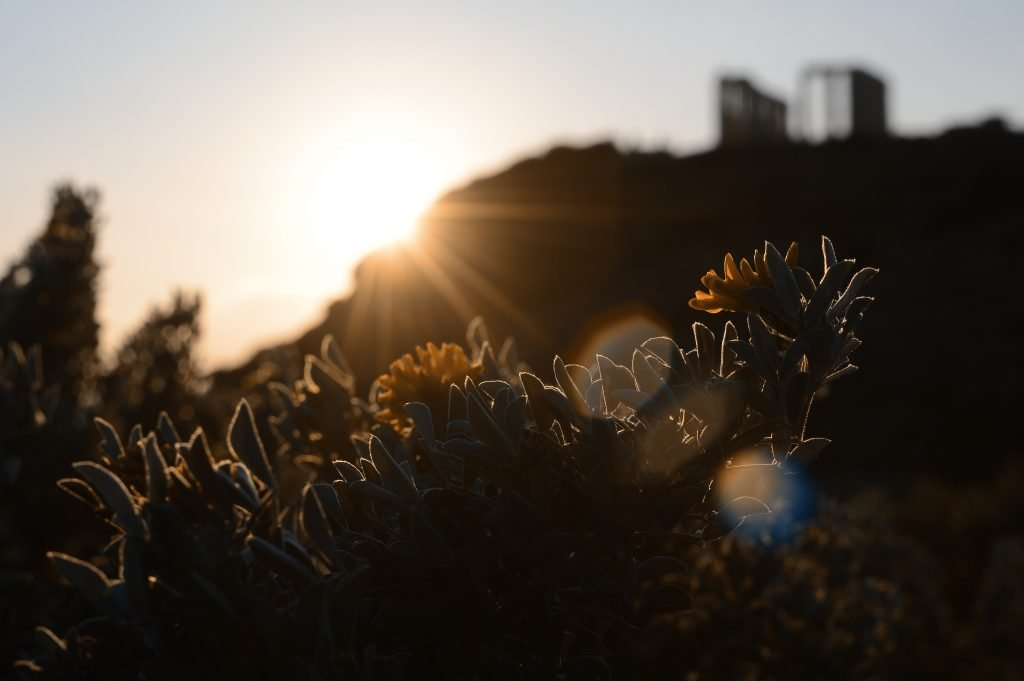 a sunset and plants to encourage self care
